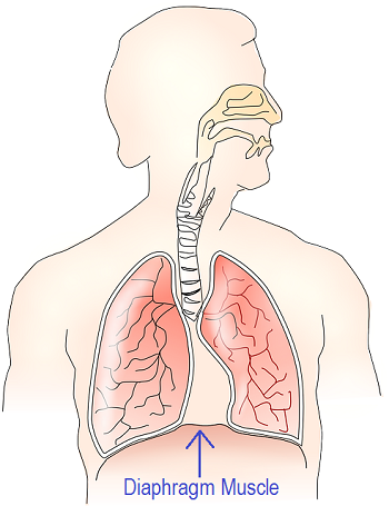 Respiratory system function physiology study lesson summary the human respiratory system is the bodys ccuart Choice Image
