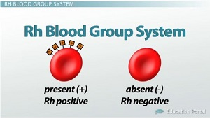 Rh Blood Group, Rh Factor & Erythroblastosis Fetalis - Video