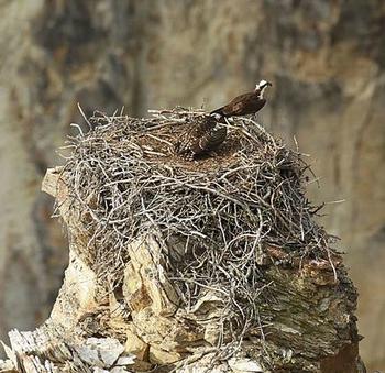 Bird Nest Information Lesson For Kids Study Com