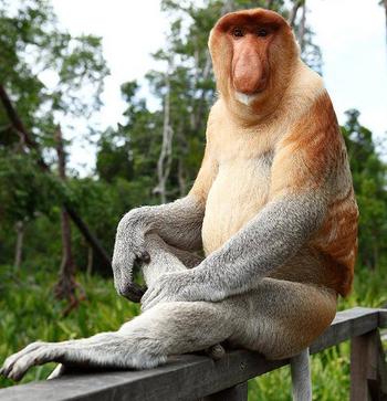What Do Monkeys Eat? - Lesson for Kids   Study com