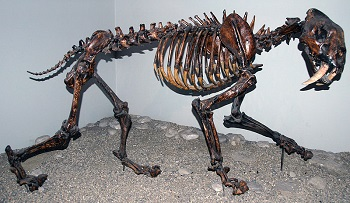 Saber Tooth Tiger Facts: Lesson for Kids   Study.com