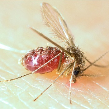 Oroya Fever: Definition, Symptoms & Treatment | Study com