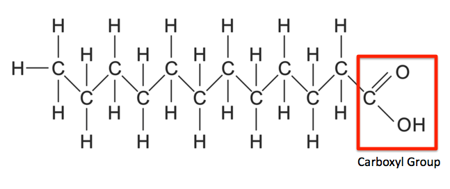 Fat Chemical Structure