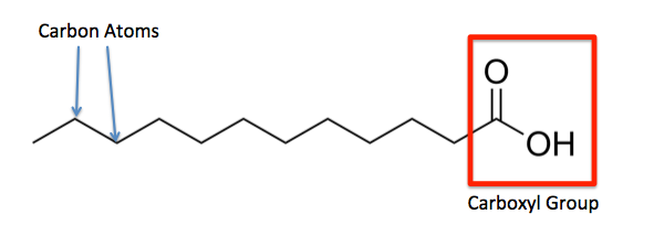 Saturated Fatty Acid  Structure  Formula  U0026 Example
