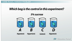 Scientific Data Tables Example 2 Bags