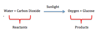 word equation for photosythesis Photosynthesis - revision notes   the word equation = carbon dioxide + water sun light energy absorbed by chlorophyll  plants, photosythesis, biomass and the.