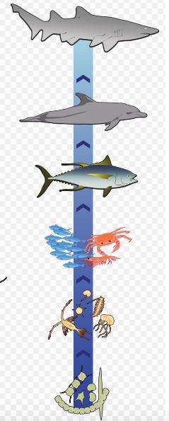 Marine Food Chain Lesson for Kids   Study.com