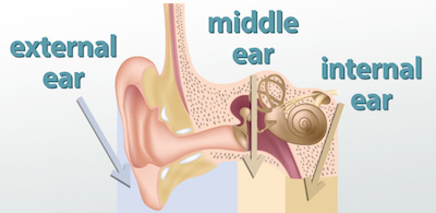 The parts of the ears video lesson transcript study ear ccuart