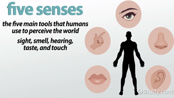 The Five Senses & Their Functions - Video & Lesson Transcript