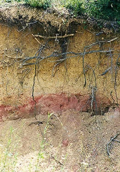 Soil layers lesson for kids for Soil profile for kids