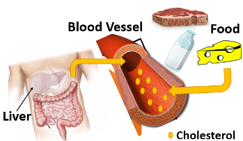 What is Cholesterol Lesson for Kids Study com