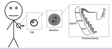 a definition of gene This term, still used today, is a somewhat ambiguous definition of what is referred to as a gene trait inheritance and molecular inheritance mechanisms of genes are still primary principles of genetics in the 21st century.