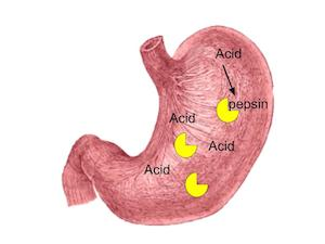 stomach acid how to make