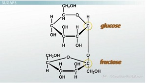 structure and function of carbohydrates - video & lesson, Human Body