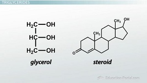 Glycerol and steroids