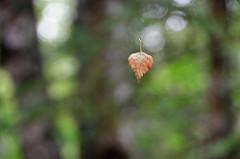 last leaf o henry critical analysis co the last leaf by o henry summary analysis study com