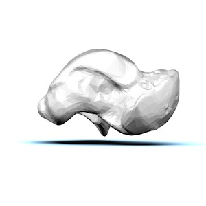 Anatomy of the Talus Bone | Study.com