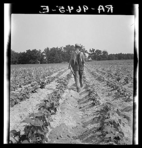 agricultural adjustment act essay Us history chapter 23 or any similar topic only for you order now federal securities act regulated stock information given by companies agricultural adjustment act(aaa) helped farmers by raising crop prices by lowering production civilian conservation corps(ccc) work project that put young men to work building roads and planting trees  us history chapter 14 section 1 us history chapter 14 chapter 17 assessment us history us history chapter 14 assessment.