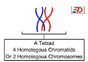 Diagram of a tetrad