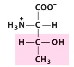 Structure highlighted in pink is the side chain of the amino acid