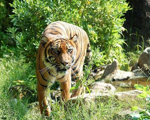 Flashcards - Tropical Rainforest Animals List & Flashcards   Study.com