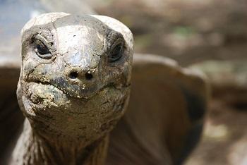 Tortoise Adaptations Lesson For Kids Study Com