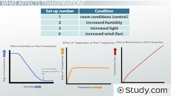 three graphs of different conditions for transpiration experiment