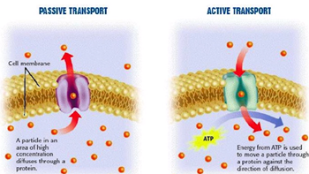 Series: Membrane Protein Transport