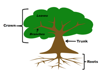 a tree has three main parts crown trunk and roots