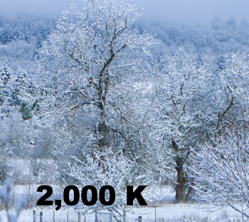 Image of Tree 2000 K