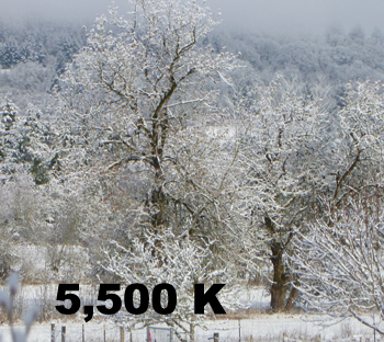 Image of Tree 5500 K