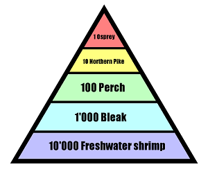 Energy pyramid ecosystems.