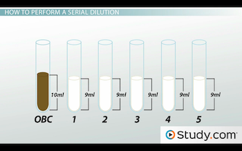 curve serial dilution how to make