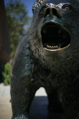what is a bruin