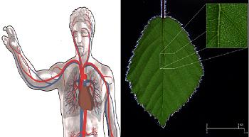 vascular tissue definition