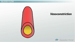 Vasoconstriction Diagram