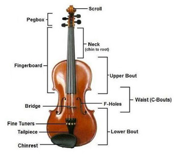 Diagram of a violin with labeled parts