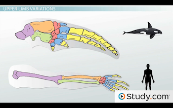 image of whale and human upper limbs