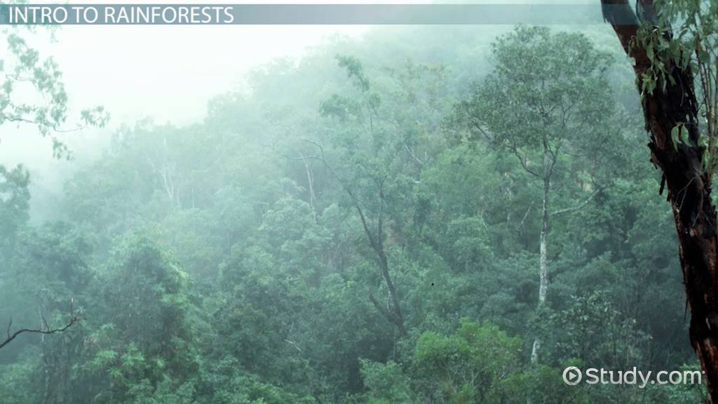 What Are Tropical Rainforests Definition Plants