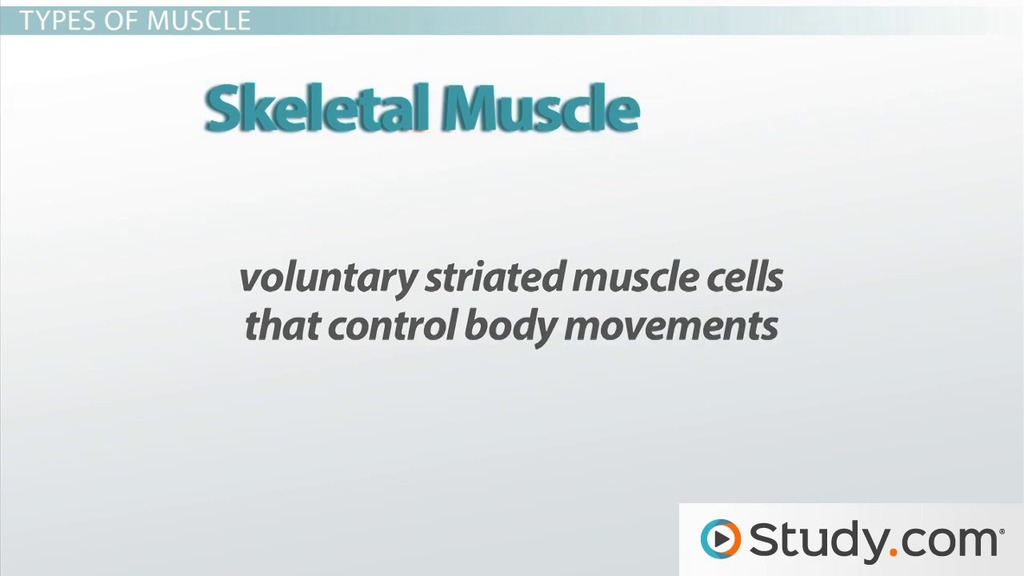Skeletal System and Muscular System - Video & Lesson Transcript ...