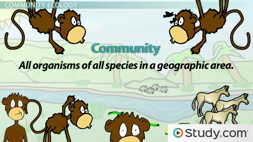 The Environment Levels Of Ecology And Ecosystems Video Lesson