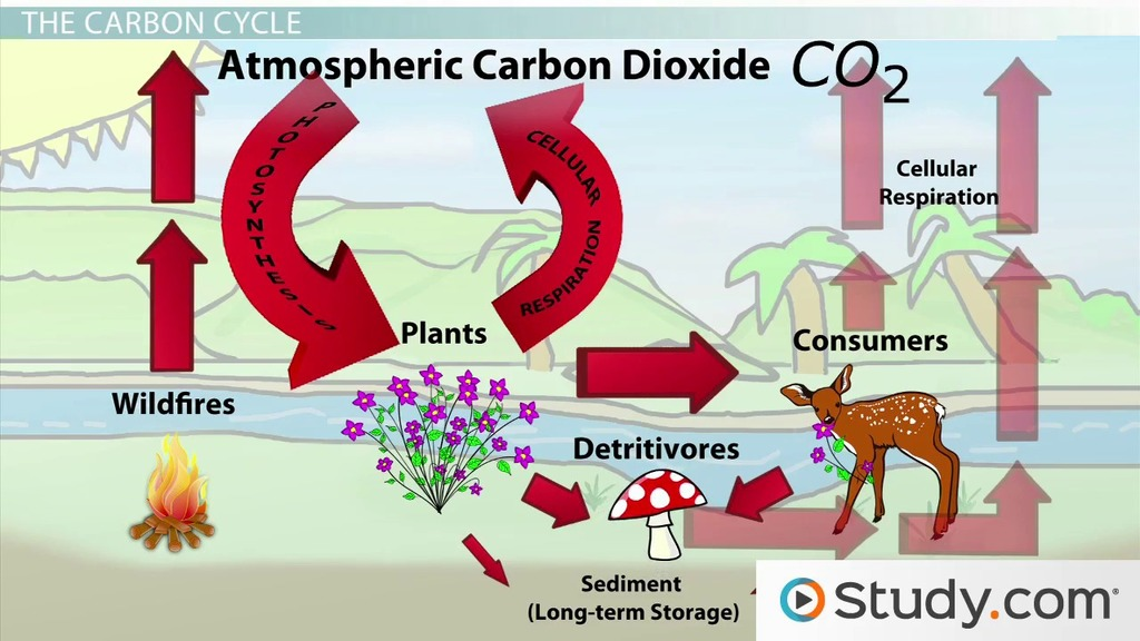 The Carbon Cycle And Long Term Carbon Storage Video Lesson