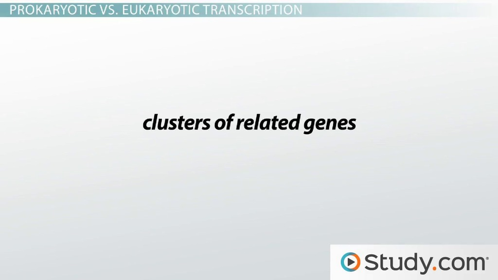 Regulation Of Gene Expression Transcriptional Repression And. Regulation Of Gene Expression Transcriptional Repression And Induction Video Lesson Transcript Study. Worksheet. Gene Expression Worksheet At Clickcart.co