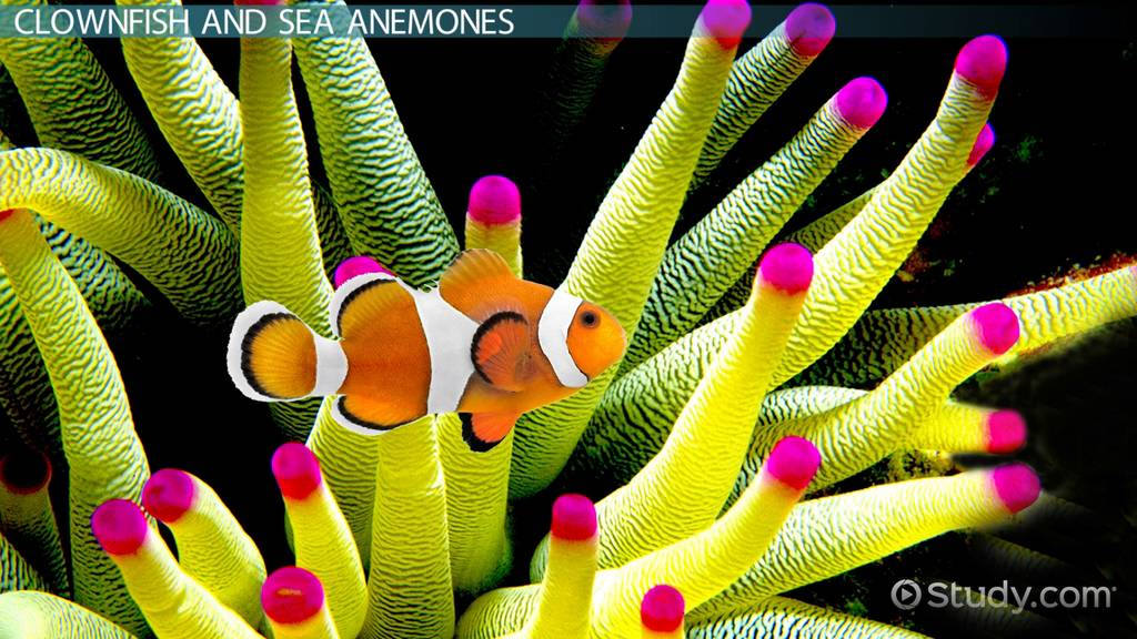 1 sea anemone and clownfish symbiotic relationship