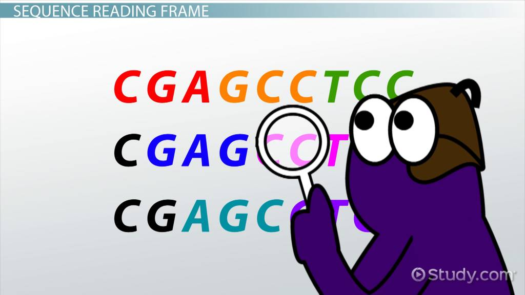 Differences between rna and dna types of rna mrna trna rrna codon definition sequences fandeluxe Image collections