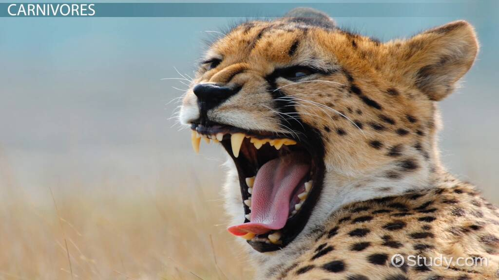 Animal Teeth Facts: Lesson for Kids