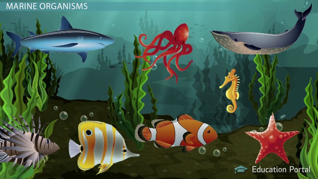 marine organism En while micro‐organisms are the most genetically diverse marine organisms and dominate the oceans' biomass, marine macro-organism diversity is also high.