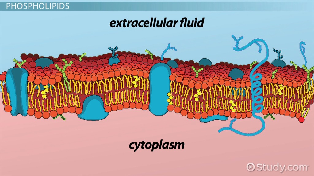 an introduction to the study of the environment on the cell membrane Chemical and molecular environment edit the study of the cell is done on cell biology focuses more on the study of bilayer of the cell membrane.