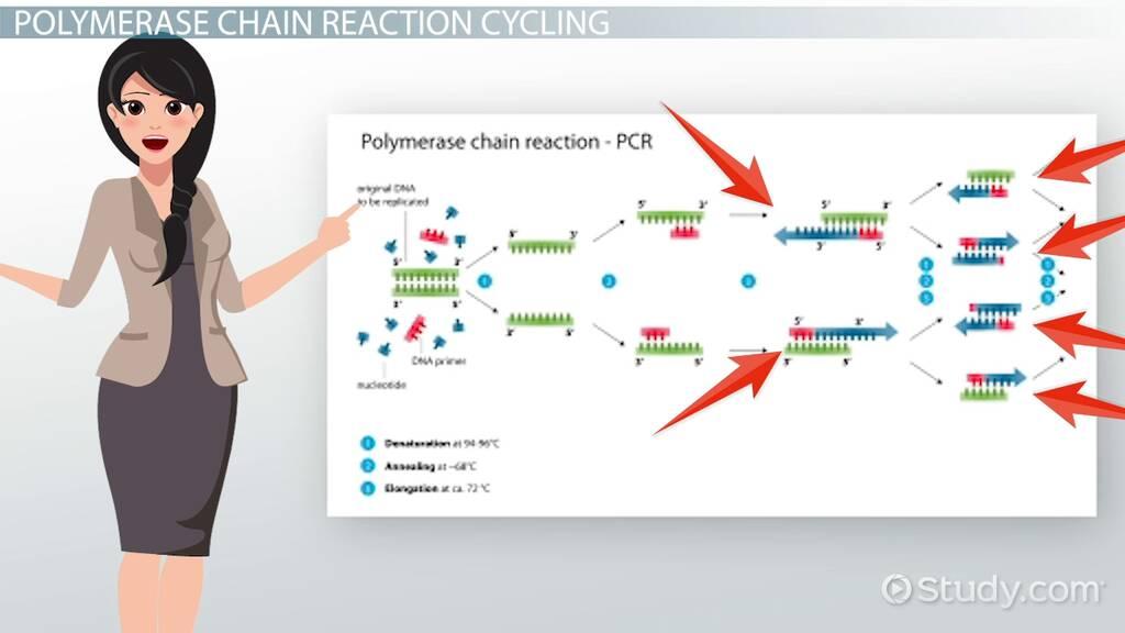 Polymerase Chain Reaction Definition Steps Video Lesson Transcript Study Com