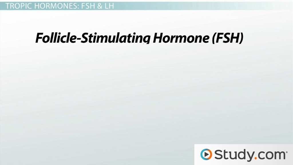 Hormones Of The Anterior Pituitary Gland Names Functions Video